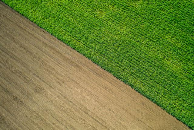 Jak chronić swoje rośliny przed stonką ziemniaczaną